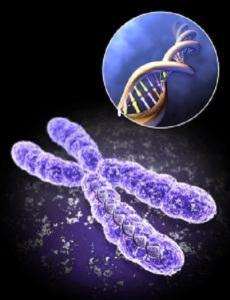 x-chromosome1 175